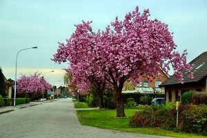 Residential Trees in Pomona