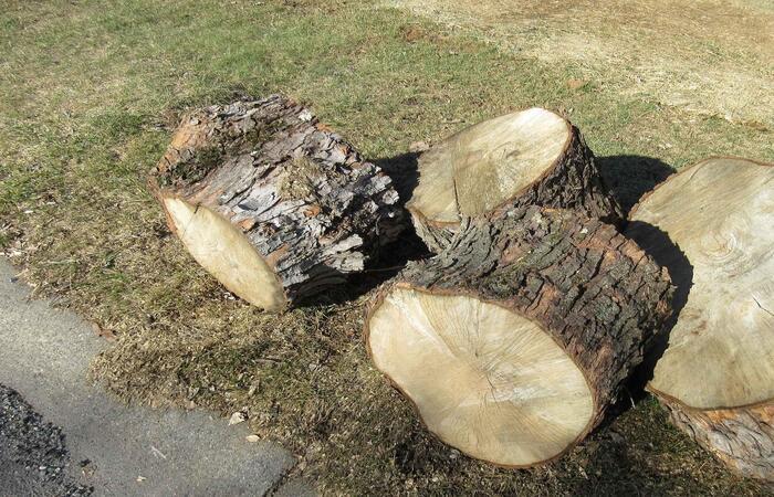 Tree Removal Pomona