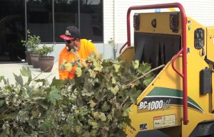 Pomona Commercial Tree Services