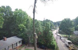 Tree Cutting in Pomona