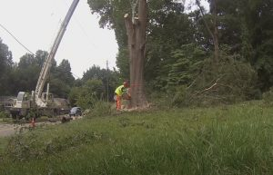 Tree Cutting in Pomona
