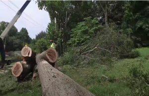 Pomona Tree Cutting Service
