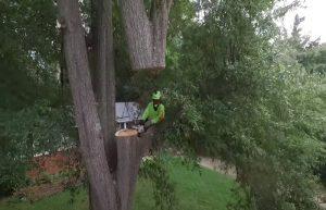 Emergency tree services in Pomona