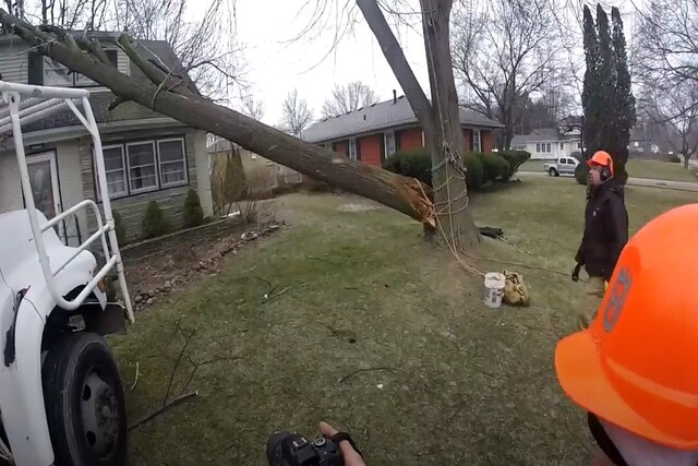 Pomona Tree Service emergency tree service