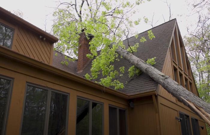 Pomona emergency tree service