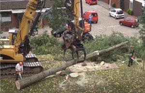 Residential tree cutting in Pomona