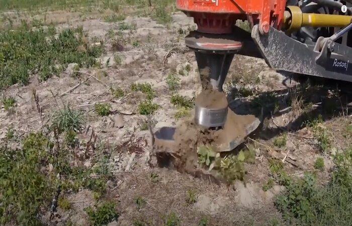 Pomona stump removal