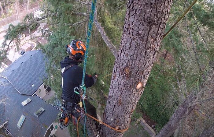 Pomona tree removal