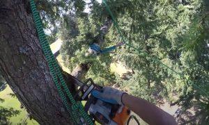 Tree Removal in Pomona, CA
