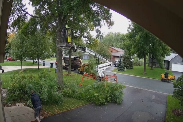 Pomona Tree Service tree removal